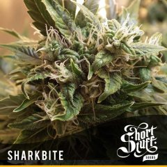 семена конопли сорт Shark Bite Auto feminized, Short Stuff Seedbank
