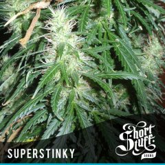 семена конопли сорт Super Stinky Auto feminized, Short Stuff Seedbank