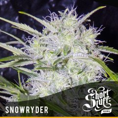 семена конопли сорт Snowryder Auto feminized, Short Stuff Seedbank