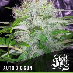 семена конопли сорт Auto Big Gun feminized, Short Stuff Seedbank