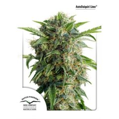 семена конопли сорт Auto Daiquiri Lime feminized, Dutch Passion