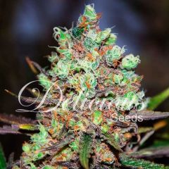 Cotton Candy feminized, Delicious Seeds