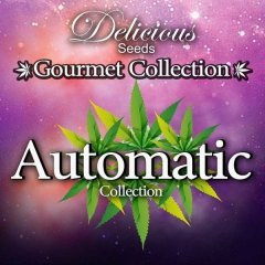 семена конопли сорт Auto Collection feminized №1, Delicious Seeds