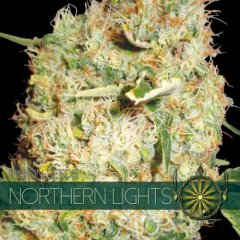 семена конопли сорт Northern Lights feminized, Vision Seeds