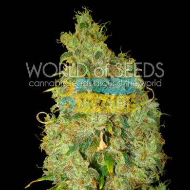 семена конопли сорт Northern Light x Skunk feminized, World of Seeds