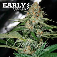 семена конопли сорт Delicious Candy Early Version feminized, Delicious Seeds