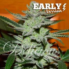 семена конопли сорт Unknown Kush Early Version feminized, Delicious Seeds