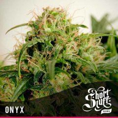 семена конопли сорт Onyx Auto feminized, Short Stuff Seedbank