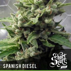 семена конопли сорт Auto Spanish Diesel feminized, Short Stuff Seedbank